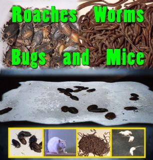 ROACHES, BUGS, WORMS, MICE - DIGITAL DOWNLOAD OR USB